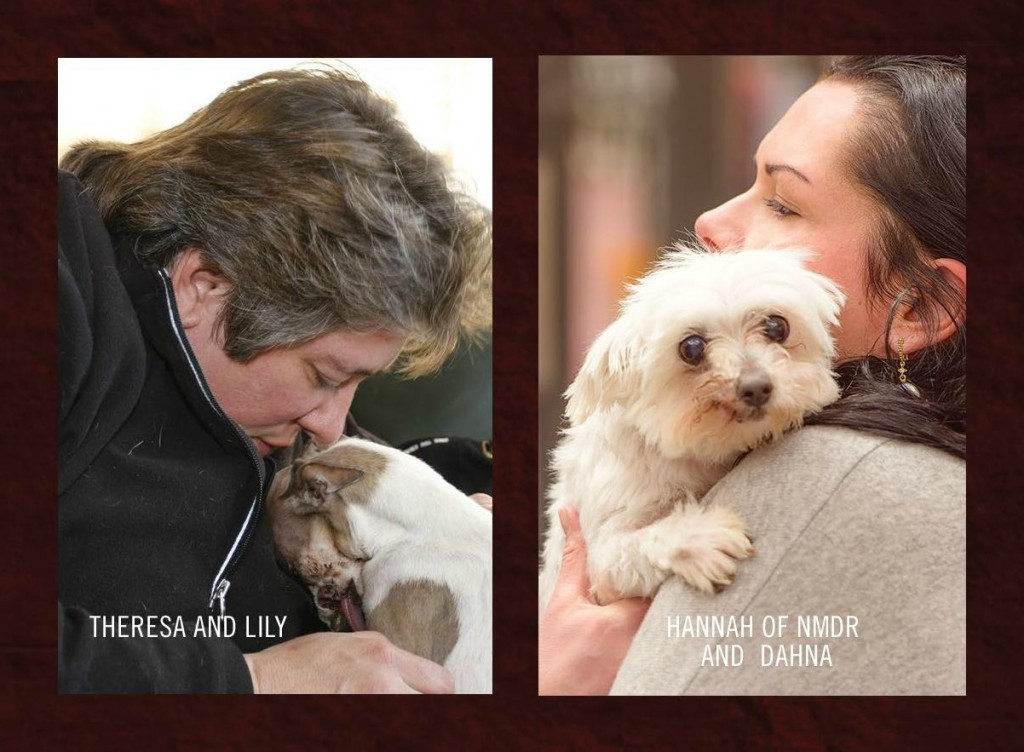 Theresa Strader of National Mill Dog Rescue : Dahna Bender Blog