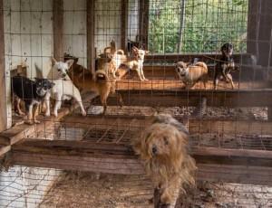 Help Stop Puppy Mills : Dahna Bender