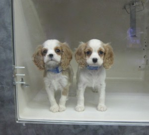 Help Puppies in the Pet Store : Dahna Bender