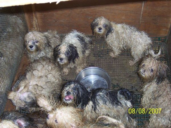 CT Passed Puppy Mill Law : Dahna Bender