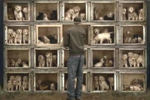 Suffolk County New York Passes Puppy Mill Legislation