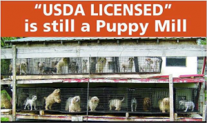 USDA puppy mill campaign : Dahna Bender Blog