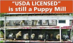 USDA puppy mill campaign : Dahna Bender Blog