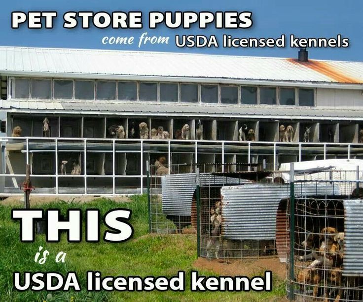 Shocking USDA Setback for Puppy Mill Dogs - PLEASE READ : Dahna Bender Blog