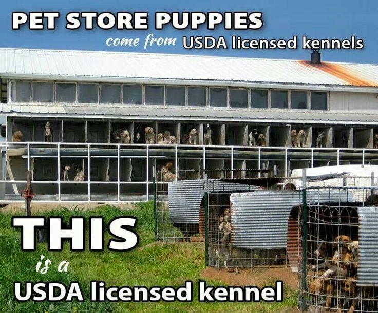 Shocking USDA Setback for Puppy Mill Dogs - PLEASE READ : Dahna Bender Blog